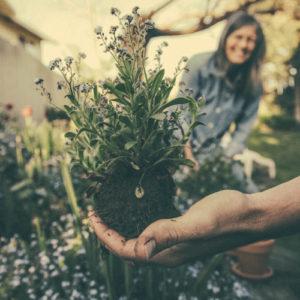 Learn Gardening